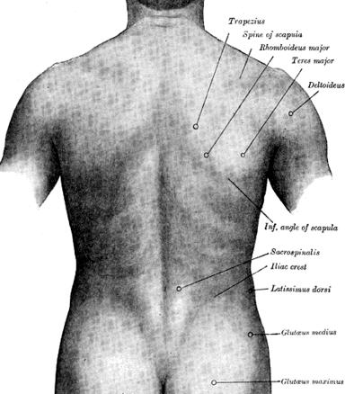 432px-gray-back