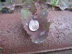Raindrops_wikimediacommons